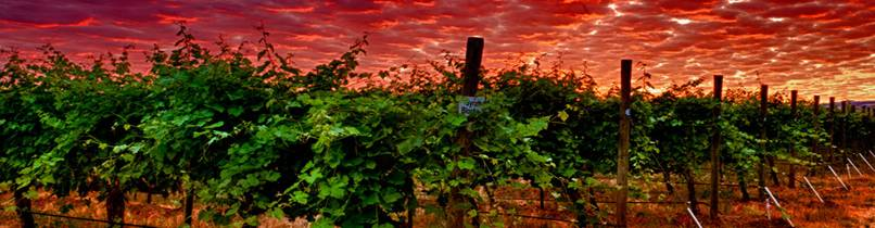 http://www.vinelines.com/gallery/home/Vineyard-Dawn-2.jpg